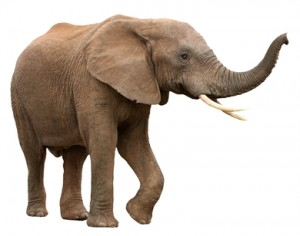 Elephant Insurance Rates In Maryland